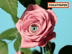 weird rose