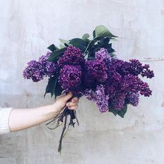 fragrant May 💜