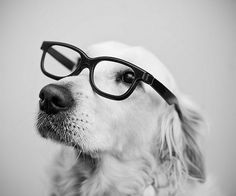 Sara Lindholm #white #black #and #fashion #dog