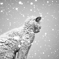 Black and White Photography by Benoit Courti » Creative Photography Blog #inspiration #white #black #photography #and