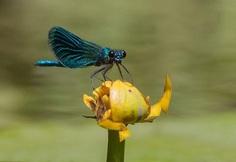 #macro_perfection: Macro Wildlife Photography by Franka Slothouber
