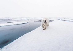 Photographer Audun Lie Dahl Captures Stunning Arctic Wildlife
