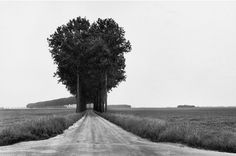 Claustrophobically Agoraphobic #photography #landscape #black and white #trees
