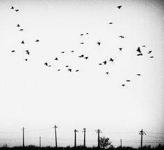 Andrei Baciu | Photogralysm | Winterly Haiku 2167 #birds