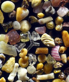 Sand grains #photo #sand #shells #grains