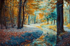 AUTOMNE on Behance