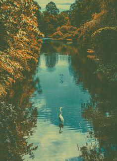 #heron #copenhagen #landscape