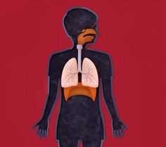 RESPIRATORY #human #illustration #body #anatomy