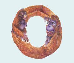 Animals in Alphabet on the Behance Network