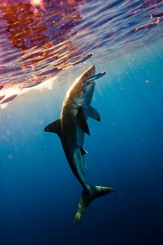 Shark Hunt by Michael Muller | Iconology #muller