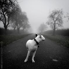 One Way, photography by Martine Fassier #dog