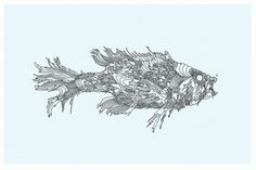 Fish drawing for West Elm 2011 (unused)