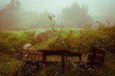 Senza titolo #photo #nature #benches #fog