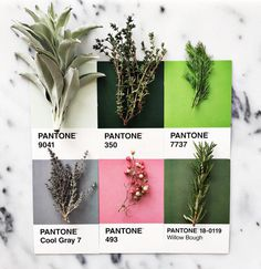 #food #herbs #colour #color #pantone