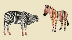 43891-013850-41a1c929546499bb5ec1148adfaa5acc.gif (480×268) #colourful #smith #colours #zebra #gif #rainbow #paul