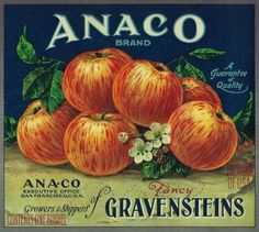 Anaco Apple Crate Label – San Francisco, CA #apple #crate #vintage #label