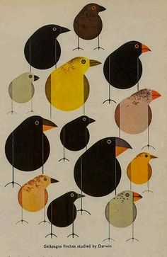 Charley Harper birds illustration #illustration #charleyharper #birds #nature