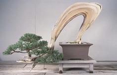 National Bonsai Museum – Washington, D.C. - Atlas Obscura