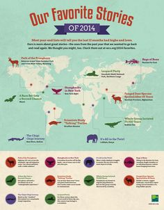 An infographic for the top favorite stories on wildlife from the past 12 months at WCS. #infographic #design #graphic #wildlife #data #visualization #animals