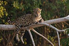 Beautiful Wild Animals Portraits by Octavio Campos Salles