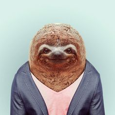 Zoo Portraits by Yago Partal | Inspiration Grid | Design Inspiration #sloth #portrait #funny #animals