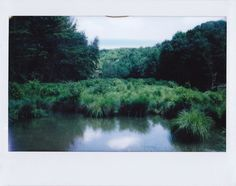 Polaroid Photography by Tyler Sharp