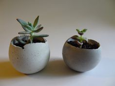 Small Concrete Bowl Planter