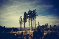 FFFFOUND! | Blog - thirtythr33.de - The Portfolio of Sebastian Bentler #blue #forest #tree #sky