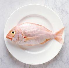 fish #gallery #fish #de #stock #villiers #patrice