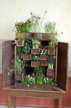 Google Reader (107) #plants #growth #dresser