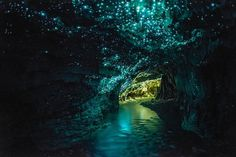 CJWHO ™ (Luminescent Glowworms Illuminate Caves in New...) #amazing #worms #design #illuminate #nature #glow #science