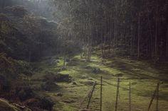 205048_site_bg_file.jpg 1300×867 pixels #presley #nathan #forest #atmosphere
