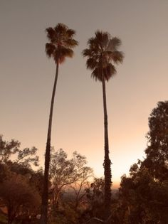 Words for Young Men #trees #sunset #california #palm