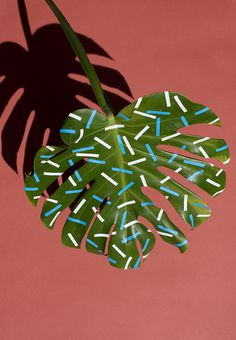 photography, design, plants, leaves, paint, patterns