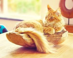 Cats Photography by Tamara Rouwendal