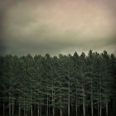 Untitled | Flickr - Photo Sharing! #photography #forest #trees #woods