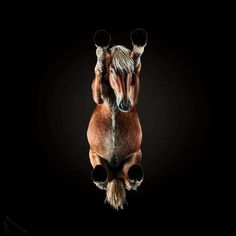 Under Horse: Andrius Burba Captures The Unseen Underside of Horses