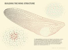 Building the wing structure #mathematics #geometry #voronoi #pattern