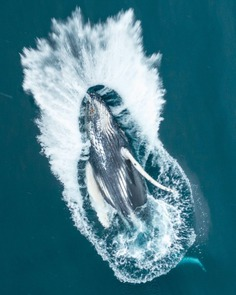 Spectacular Wildlife and Underwater Photography by Justin Hofman