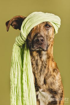 Photograph Pirate in Green by Elke Vogelsang on 500px #animal #pirate #photography #portrait #green #dog #canine #bandanna