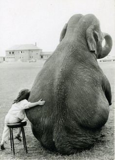 Wall Photos #photography #elephant