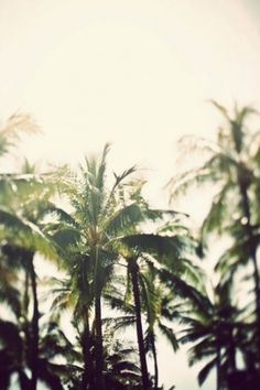 Palm trees in the light | Murray Mitchell #inspiration #photography #palms