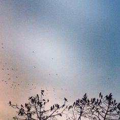 www.infectedgallery.com #birds #tree #evening