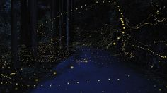 Magical Long-Exposure Firefly Photos Go Viral   Raw File   Wired.com #firefly
