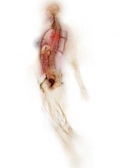 tumblr_lz5413pMWn1qz6f9yo1_500.jpg (499×699) #body #anatomy #translucence