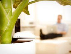 Koubachi Wi-Fi Plant Sensor #gadget