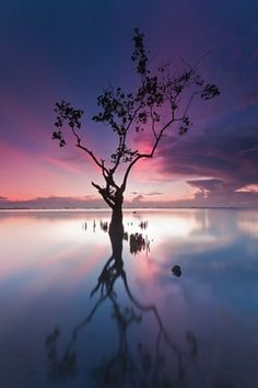 Beautiful photography from all over the world | From up North #clouds #water #tree #photography #reflection