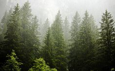 Standing Elements #rain #photography #forrest