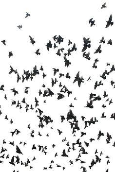 birds #birds #black