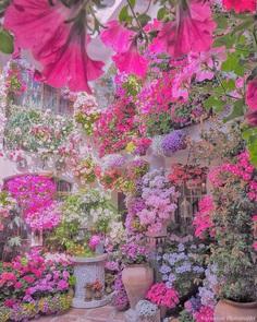 Fabulous and Colorful Flower Photography by Tatsuya Kurisu